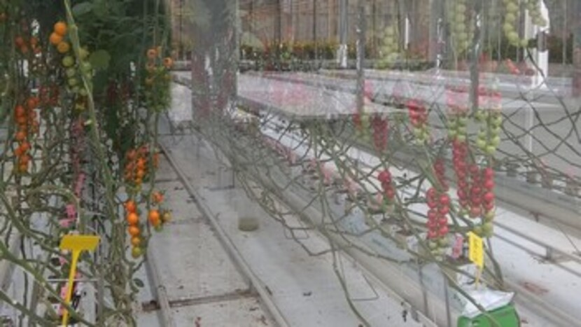 worldhorticenter, Netherlands, exhibition, greenhouse,